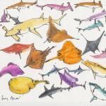 Sharks & Rays, Swordfish, & Tortoise SRB